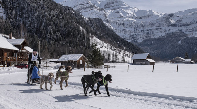 Traumverhältnisse am 38. Internationalen Schlittenhunderennen in Lenk 2017